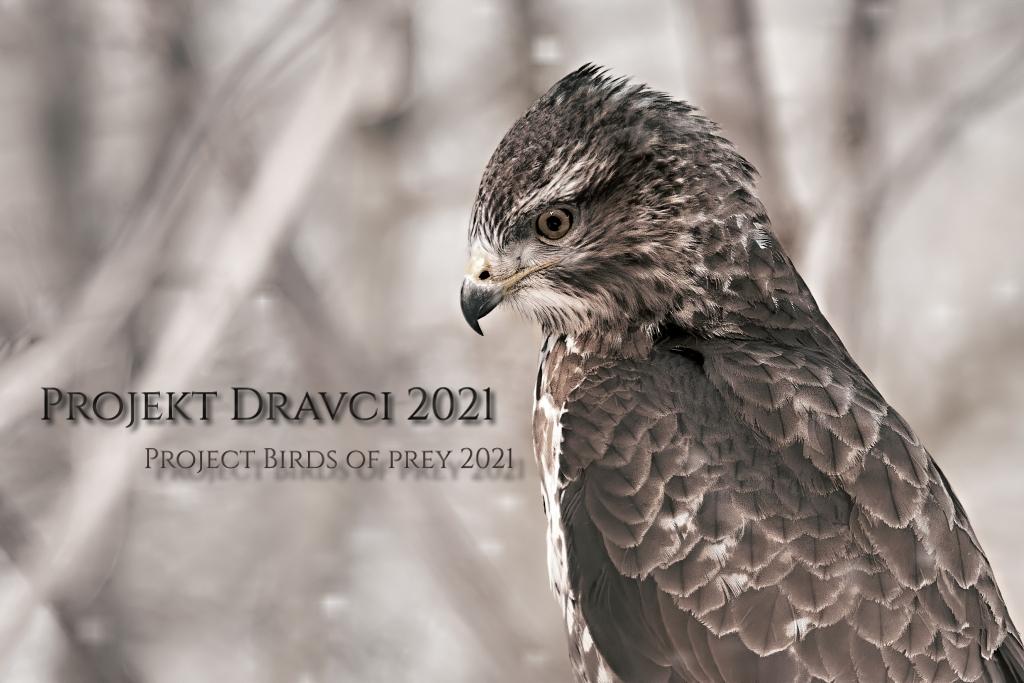 Projekt dravci 2020 – aktualizováno